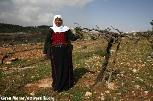 Palestinian woman and a destroyed olive tree