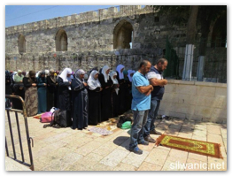 Israel terrorizing Al-Aqsa and worshipers  Aug 17, 2014 (Click to go to the album)
