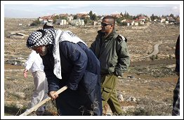 3 Palestinians arrested while working their land close to illegal Israeli settlement of Suseya (Click to see press release and photos)