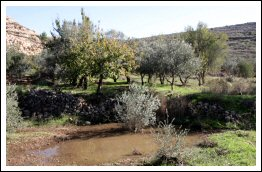 #PHOTOS | Beitar Illit illegal settlement pours large amount of wastewater on land of Wadi Fukin village - Dec 4, 2012 (Click to see the full album)