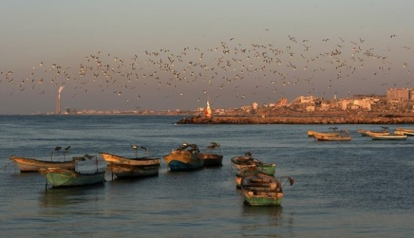 Seagulls fly over the port of Gaza City on the Mediterranean Sea at sunset on January 6, 2012.      AFP PHOTO/MAHMUD HAMS