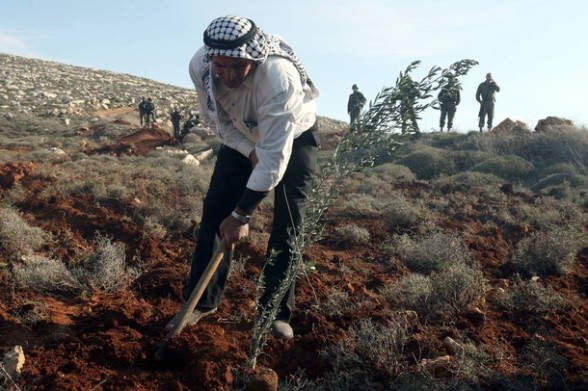 Israeli soldiers look on as Palestinian farmers plant olive trees on their land in the Israeli occupied West Bank close to the village of Qusra, just south of the city of Nablus on January 23, 2011, following previous altercations with Jewish settlers. AFP PHOTO/JAAFAR ASHTIYEH