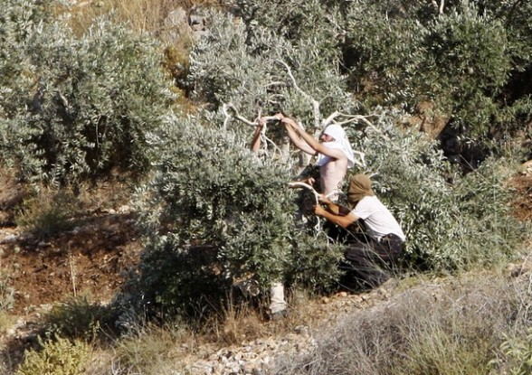 Jewish settlers break the branches of an olive tree in a grove belonging to the West Bank village of Asira al-Qibilya near Nablus July 3, 2011. According to witnesses, clashes erupted on Sunday after the settlers caused damage to olive trees belonging to the Palestinian village. An Israeli army spokesperson said one Israeli was injured by a rock before security forces dispersed the crowd. REUTERS/Abed Omar Qusini