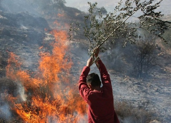 A Palestinian man uses a olive tree branch to extinguish a fire at an olive tree grove and surrounding grazing land that was allegedly set ablaze by Jewish settlers in the northern West Bank village of Salem, east of Nablus in the Israeli occupied West Bank, on November 14, 2010. Since the start of the olive harvest last month, there have been scores of Palestinian complaints about settlers cutting down trees, stealing olives or preventing farmers from harvesting their crops, human rights groups and police say. AFP PHOTO/JAAFAR ASHTIYEH