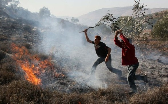 Palestinians extinguish fire at an olive tree grove that was allegedly set ablaze by Jewish settlers in the northern West Bank village of Salem, east of Nablus, on November 14, 2010. AFP PHOTOJAAFAR ASHTIYEH