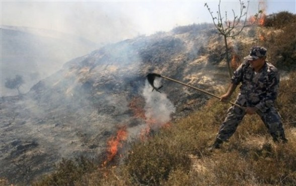 A Palestinian policeman tries to extinguish fires at an olive tree grove in the northern West Bank village of Burin, near Nablus, Friday, July 15, 2011. Palestinians at the scene claimed the grove was set ablaze by Israeli settlers, a claim which could not be immediately or independently verified. (AP Photo/Nasser Ishtayeh)