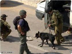 images_News_2012_02_04_iof-dog_300_0[1]