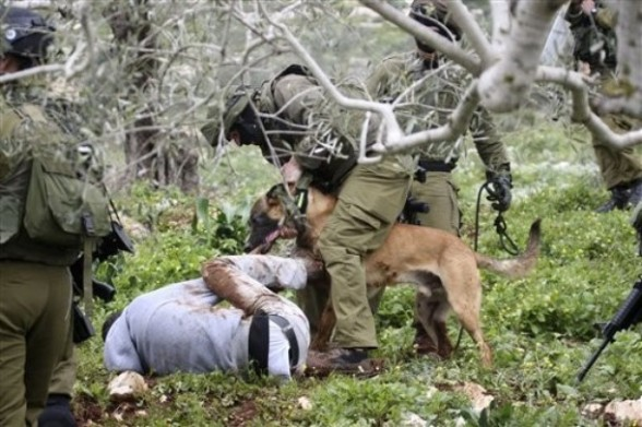 An Israeli police dog attacks a demonstrator during a protest in the village of Kufr Qaddum near the Israeli settlement of Kdumim in the northern West Bank, Friday, March 16, 2012. (AP Photo/Nasser Ishtayeh)
