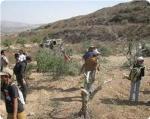 images_News_2012_04_23_settlers-destroying-agricultural-lands_300_0[1]