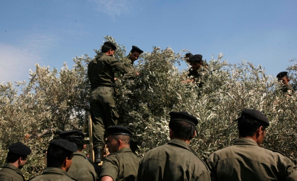 Palestinian National Forces members help residents of Jayyus in harvesting olives – Qalqilya district - Oct 11, 2012 Photo by WAFA
