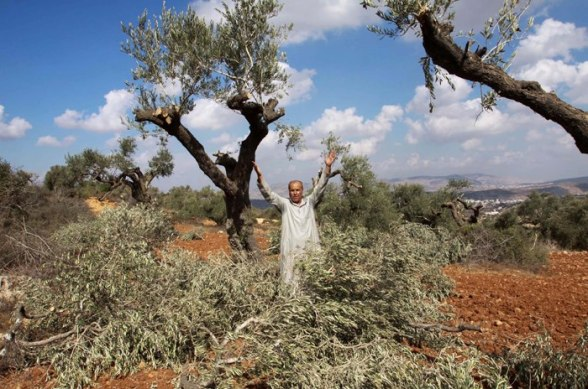 Jewish extremists cut down over 120 olive trees on private Palestinian land in Nablus on Tuesday, a Palestinian Authority official said.