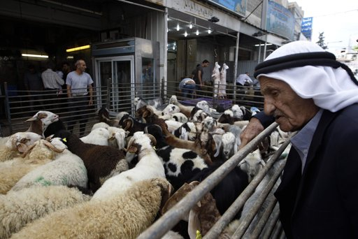 Palestinian man looks at sheep before they are slaughtered on the first day of Eid-al-Adha in the West Bank town of Al-Ram near Jerusalem October 26, 2012. Muslims around the world celebrate Eid al-Adha to mark the end of the Haj by slaughtering sheep, goats, cows and camels to commemorate Prophet Abraham's willingness to sacrifice his son Ismail on God's command. REUTERS/Ammar Awad