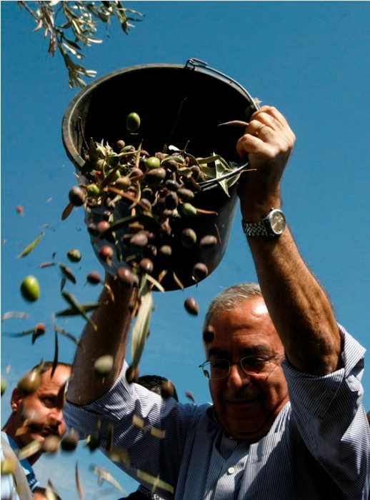 Prime Minister Dr. Salam Fayyad takes part in olive harvest with residents of Jayyus – Qalqilya district - Oct 11, 2012 Photo by WAFA