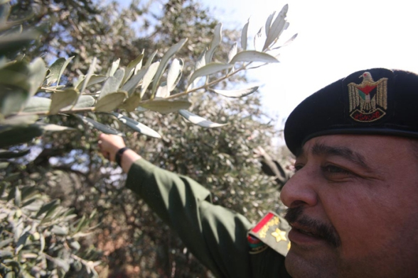Jenin - National security forces assist farmers with harvesting olives - Oct 14, 2012 Photo: Seif Dahleh/WAFA