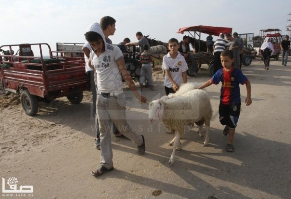 Preparations for Eid al Adha in Gaza - Oct 20, 2012 Photo by SAFA