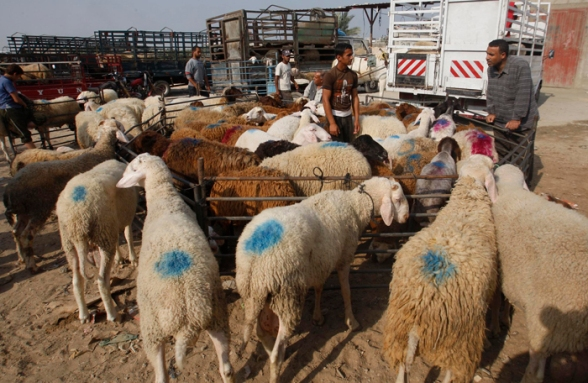Oct 22, 2012 | Gaza preparing for Eid al-Adha Photo: Hatem Moussa/WAFA