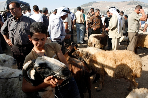 Oct 22, 2012   Nablus - the sale of livestock movement in the Palestinian territories on the occasion of the approaching Eid al-Adha (Photo: Ayman Nubana/WAFA)