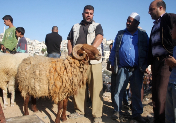 Oct 25, 2012 | Sale of livestock for upcoming Eid Al Adha (Feist of the Sacrifice) – Bethlehem Photo by Ahmad Mazhar/WAFA