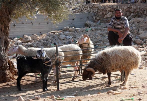 Oct 25, 2012   Sale of livestock for upcoming Eid Al Adha (Feist of the Sacrifice) – Bethlehem Photo by Ahmad Mazhar/WAFA