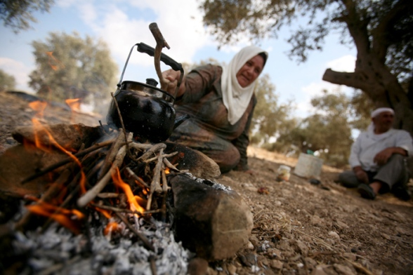 Jenin - the start of the olive harvest season in the village of Qabatiya Photo: Seif Dahleh / Wafa.ps