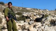 Dec 17 2012 Israel soldier chase away shephers and flocks 333429_10151134165686986_1614697028_o