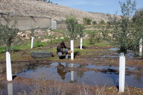 Beitar Illit illegal settlement pours large amount of wastewater on land of Wadi Fukin village - Dec 4, 2012