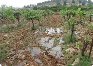 images_News_2013_01_24_nablus_300_0[1]