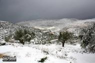 Jan 10 2013 - Qusra in the snow in Palestine - Photo by Qusra net 10