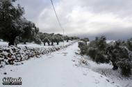 Jan 10 2013 - Qusra in the snow in Palestine - Photo by Qusra net 9