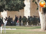 Jan 29 2013 Female Israeli Soldiers March through Aqsa Compound - Photo by QudsMedia 24