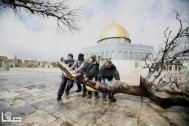 Jan 7 2013 Aftermath Storm West Bank Palestine 37
