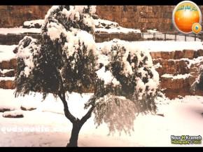 Snow in Palestine - Snow in Jerusalem Photo via QudsMedia - 14