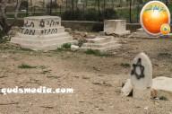 Febr 14 2013 Racist slogans on Jerusalem cenetery - Photo by QudsMedia 40