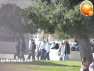Febr 7 2013 Settlers and armed forces desecrate al-Aqsa Mosque - Photo by QudsMedia 14