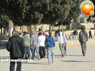 Febr 7 2013 Settlers and armed forces desecrate al-Aqsa Mosque - Photo by QudsMedia 16