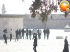 Febr 7 2013 Settlers and armed forces desecrate al-Aqsa Mosque - Photo by QudsMedia 2