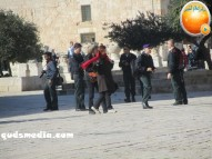 Febr 7 2013 Settlers and armed forces desecrate al-Aqsa Mosque - Photo by QudsMedia 26