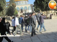Febr 7 2013 Settlers and armed forces desecrate al-Aqsa Mosque - Photo by QudsMedia 33