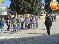 Febr 7 2013 Settlers and armed forces desecrate al-Aqsa Mosque - Photo by QudsMedia 36