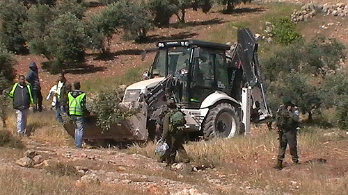 Israeli bulldozer uprooting olive trees (Photo by CPT)