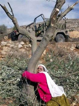 olivetree_woman[1]
