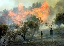burn_trees[1]