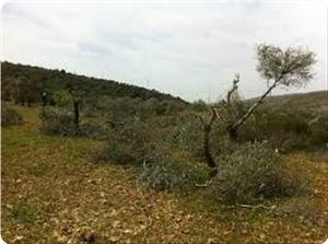 images_News_2013_05_06_trees-damaged-by-settlers_300_0[1]