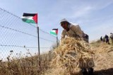 Farmers are reaping their wheat from the fields adjacent to the border with Israel.