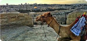 images_News_2013_06_19_Aqsa-0_300_0[1]