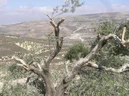 treescut[1]