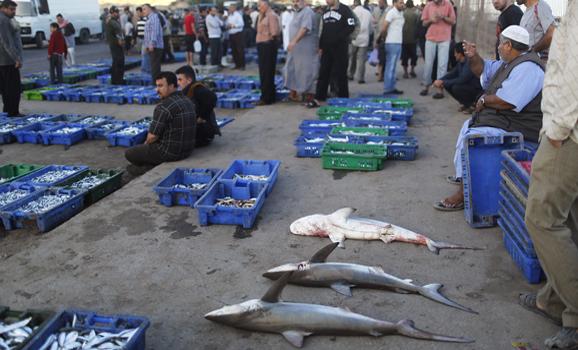 Palestinians sell fish at a fish market in Gaza City, May 22, 2013. (photo by REUTERS/Suhaib Salem)