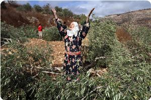 images_News_2013_07_05_destroyed-olive-trees_300_0[1]