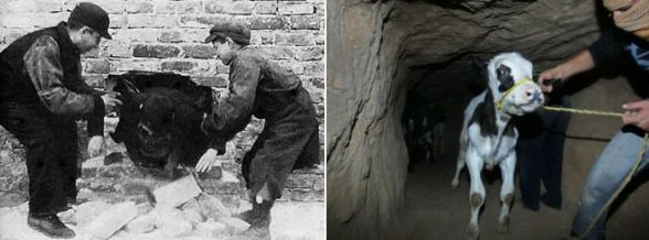 "Smuggling to survive deprivation. On the Left: ""Warsaw during WWII"" On the Right: ""Gaza in 2012″"