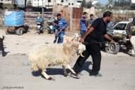 Gaza prepares for Eid ul-Adha buying sacrificial animals - Photo by palinfo.com